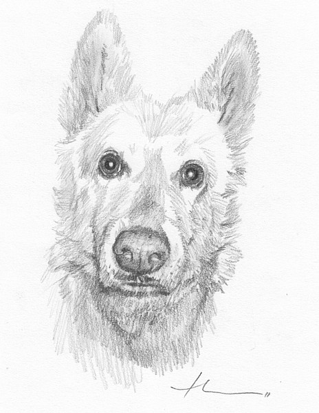 wp-lg albino dog pencil portrait