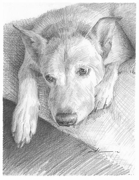 resting dog pencil portrait