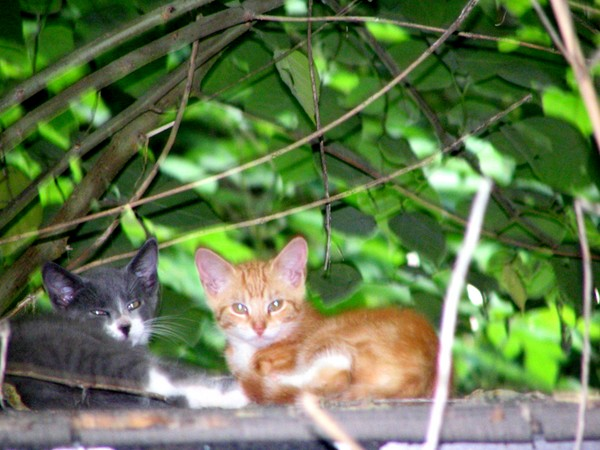 2 farm kittens