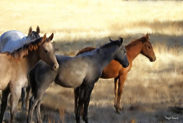 Sunset Horse Gathering