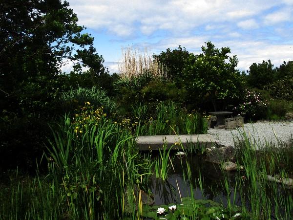 Chinses Garden, Seattle