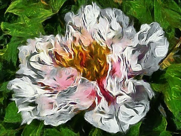 Carnation Monet