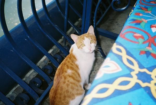 Kitty in Cairo II