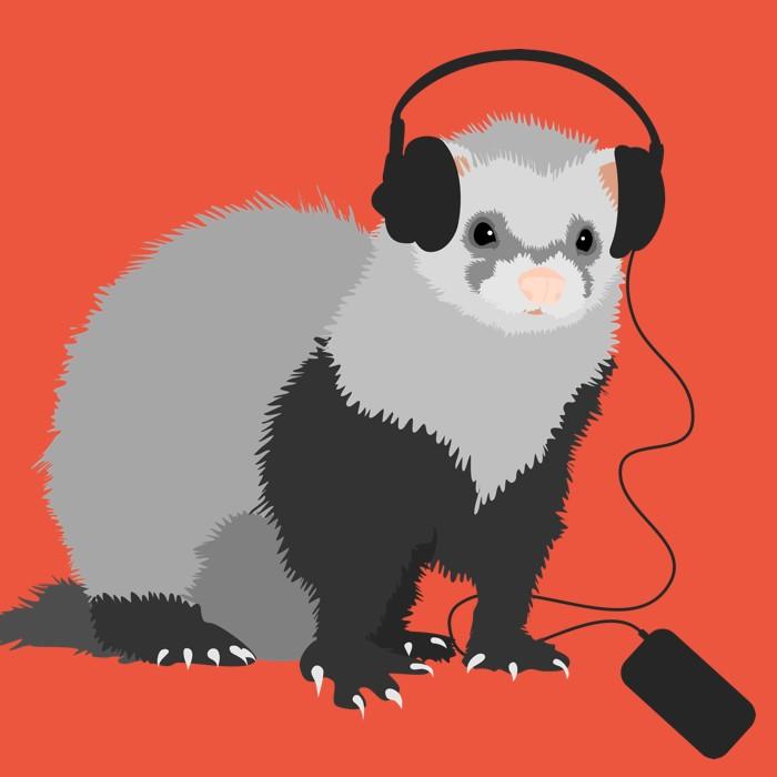 Music loving ferret