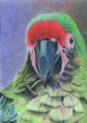 Bob is a Pretty Boy! - ACEO