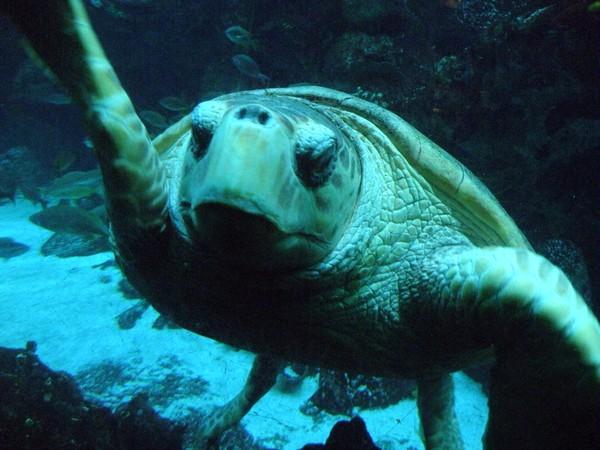 Turtle III