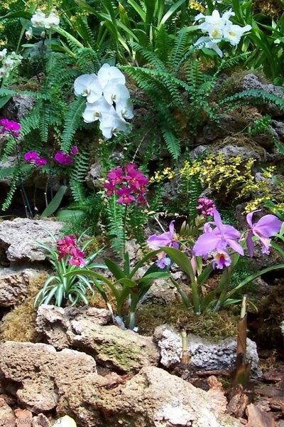 An Array of  Orchids
