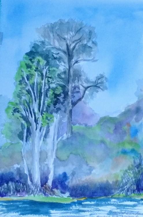 Trees Blanchard Park $150USD
