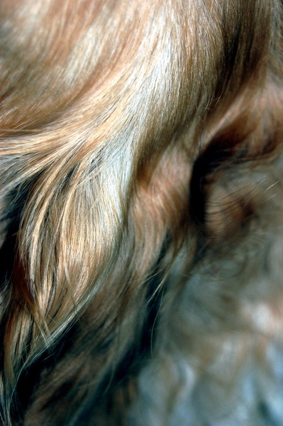 Abstract Dog Fur No.001