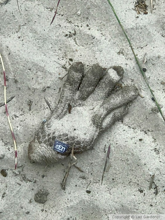 Lost Beach Glove