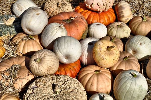 More Gourds and Pumpkins