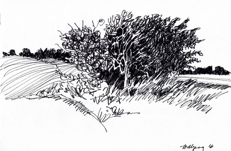 Todbjerg, a bush