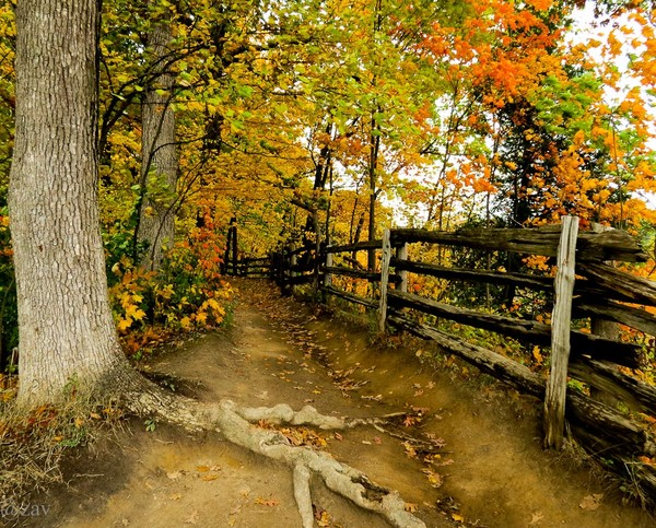 Forest pathway...