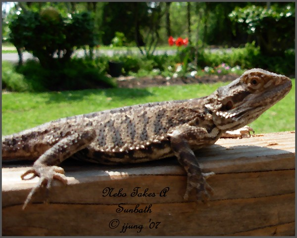 Nebo Takes A Sunbath