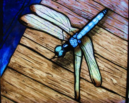 Dragonfly-Blue Dasher