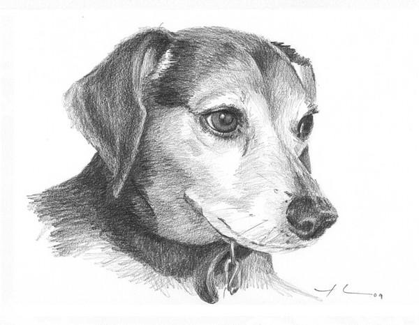 wp-lg beagle pencil portrait