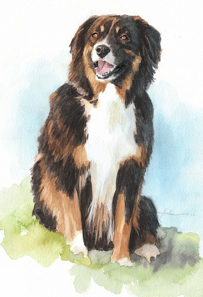 herding dog watercolor mike theuer
