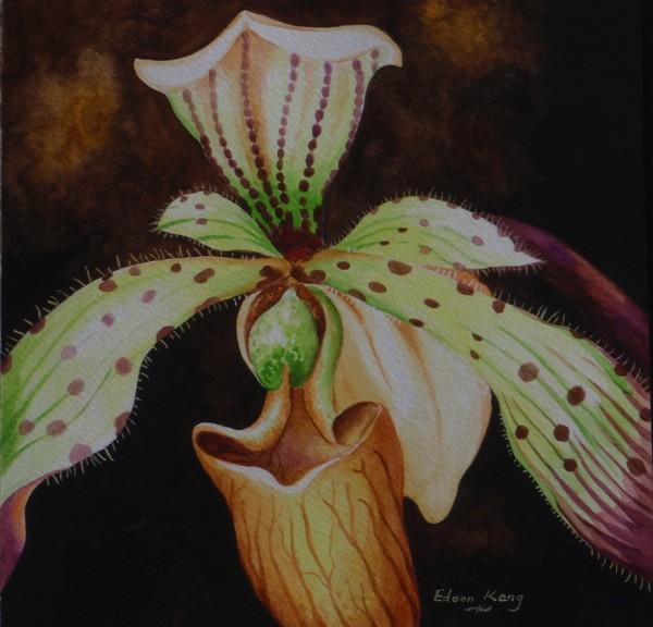 Borneo Orchid P Lebaudyanum