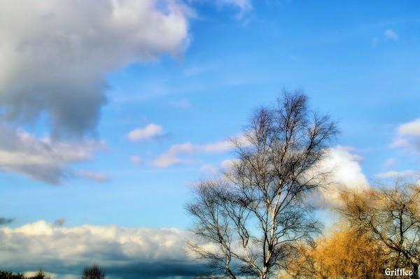 FEBRUARY BLUE SKY