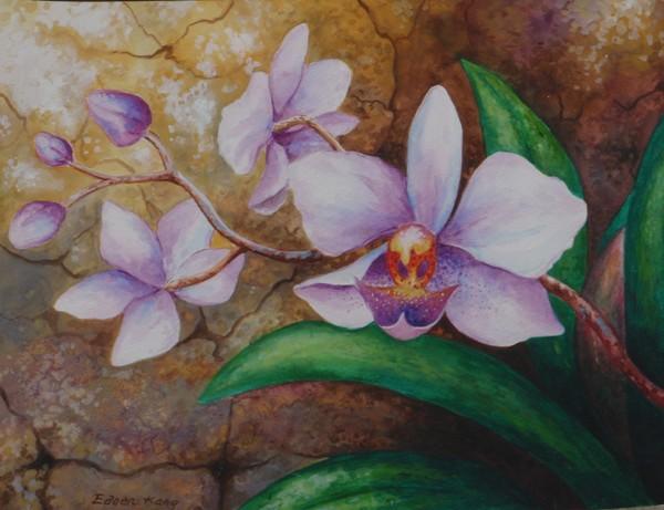 Borneo Orchids 2