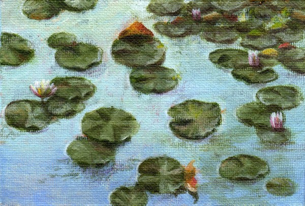 Early Morning Water Lilies