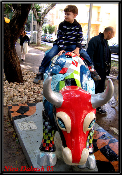 Yarin Riding Parabulla