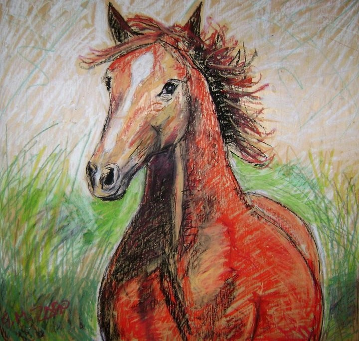 Il cavallo selvaggio 2010