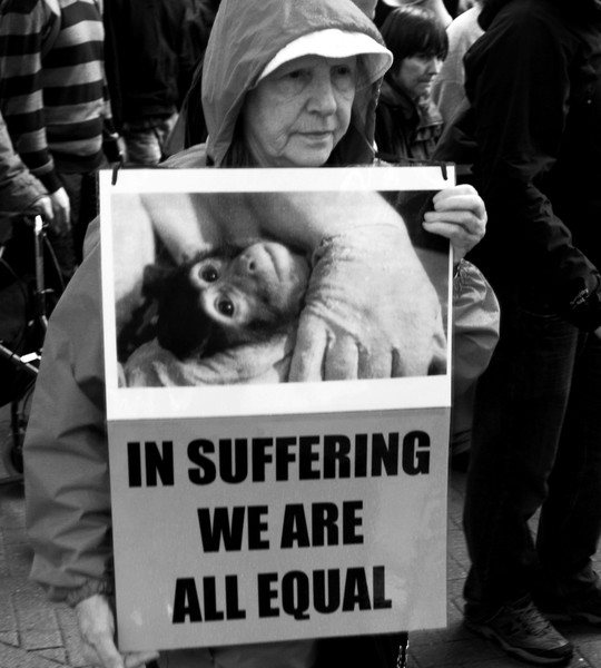 In Suffering We Are All Equal.