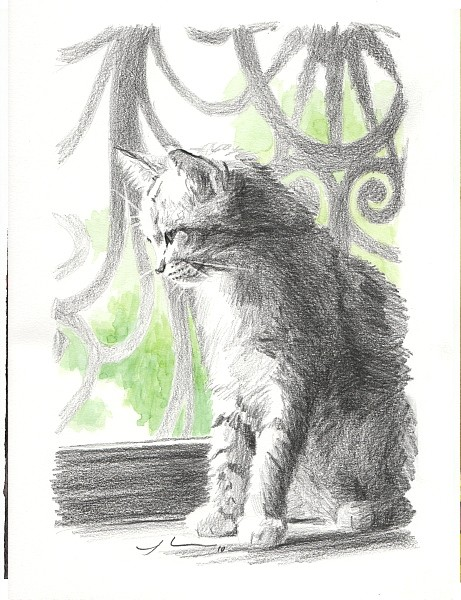 kitten watercolor drawing mike theuer