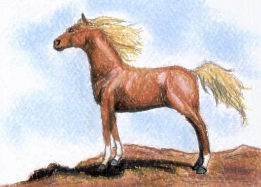 Chestnut Arabian 2 ACEO