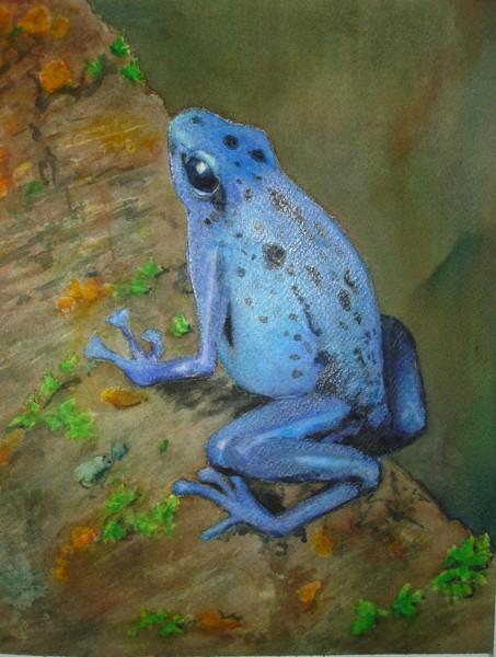 Brilliant Blue Poison Dart Frog