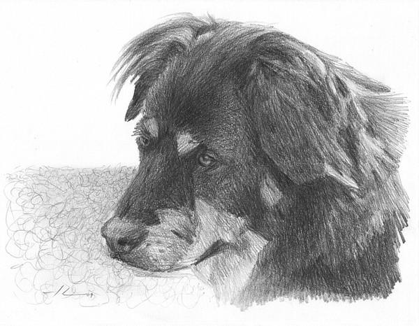 wp-lg old dog portrait