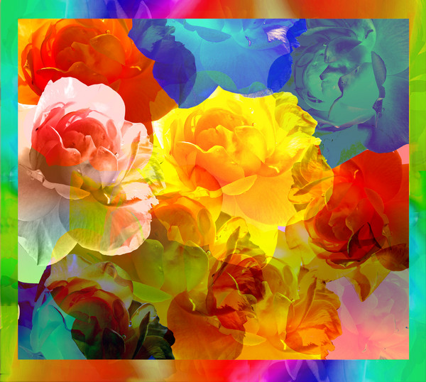 Roses of Different Colors