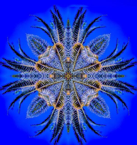 Palm tree Klscd