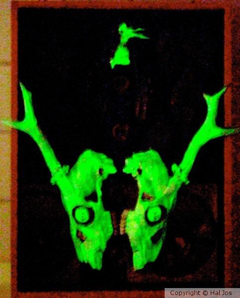 Death-halloo at night 2012
