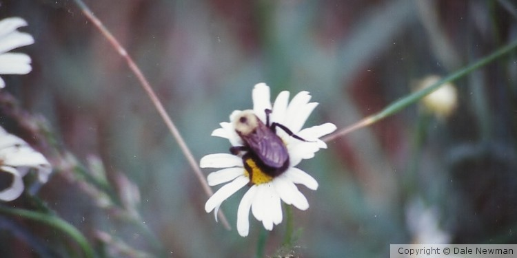Bee and His Flower