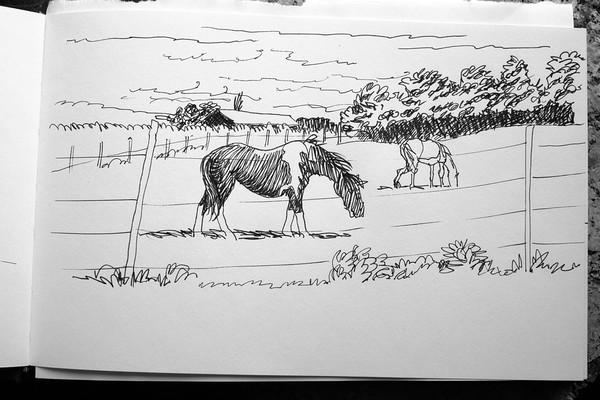 Grassing horses