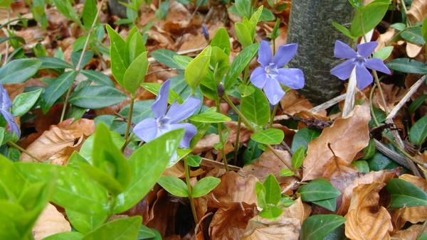undergrow