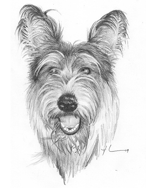 wp-lg picardy dog drawing