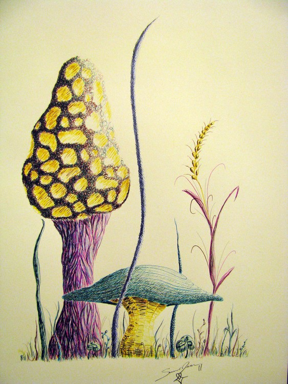 Another Morel