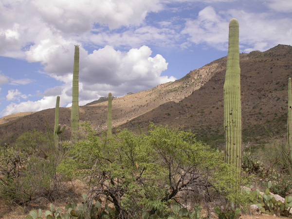 Desert Calm II