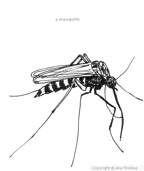 642 Things to Draw #30 - A Mosquito