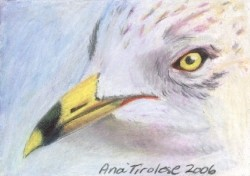 Seagull # 2 - ACEO