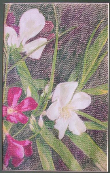 Oleanders II