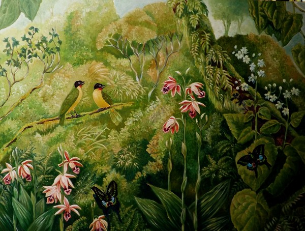 Flamethroats, Peacocks and Orchids