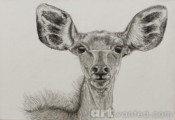 Curious Kudu Femail Portrait