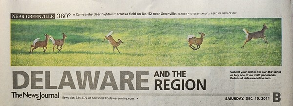 32nd News Journal Panorama - Hightail Deer