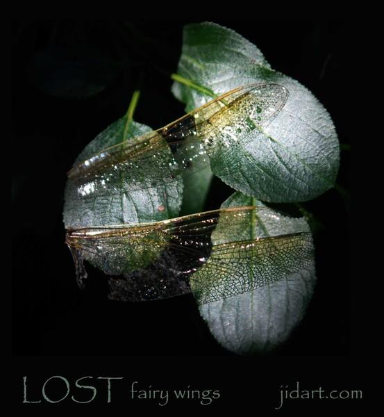Lost Fairy Wings