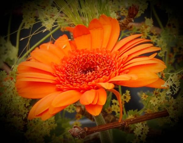 Mystic orange glory