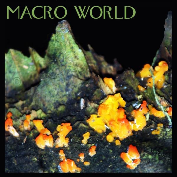 Macro World